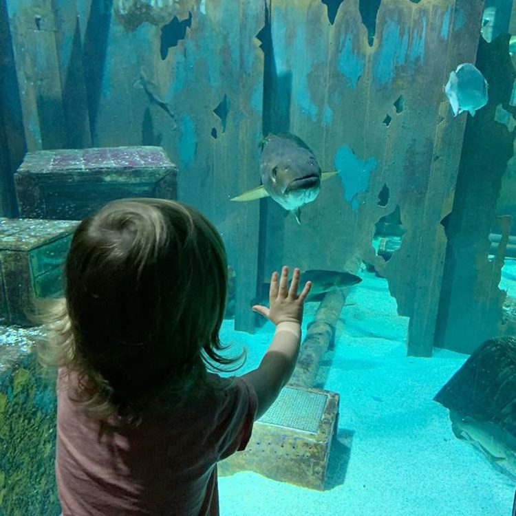 Sophie loved seeing all the fish and other marine life at Bristol Aquarium